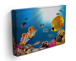 Photo of a coral colony Canvas Print or Poster - Canvas Art Rocks - 3