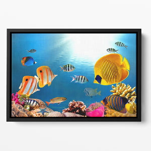 Photo of a coral colony Floating Framed Canvas
