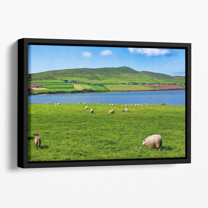 Photo sheep in rural landscape for farming Floating Framed Canvas