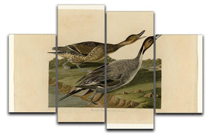 Pin tailed Duck by Audubon 4 Split Panel Canvas - Canvas Art Rocks - 1