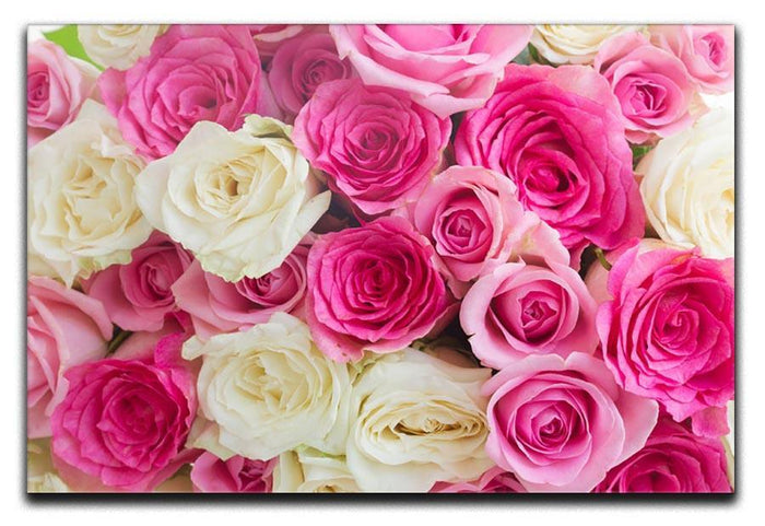 Pink and white fresh rose flowers Canvas Print or Poster
