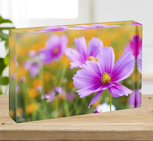 Pink cosmos in the flower fields Acrylic Block - Canvas Art Rocks - 2