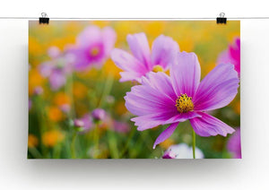Pink cosmos in the flower fields Canvas Print or Poster - Canvas Art Rocks - 2