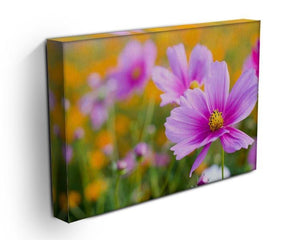 Pink cosmos in the flower fields Canvas Print or Poster - Canvas Art Rocks - 3