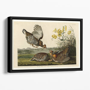 Pinnated Grouse by Audubon Floating Framed Canvas