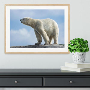 Polar bear walking on rocks Framed Print - Canvas Art Rocks - 3