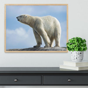 Polar bear walking on rocks Framed Print - Canvas Art Rocks - 4