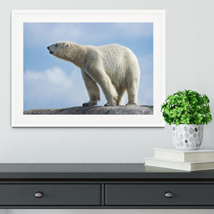 Polar bear walking on rocks Framed Print - Canvas Art Rocks - 5