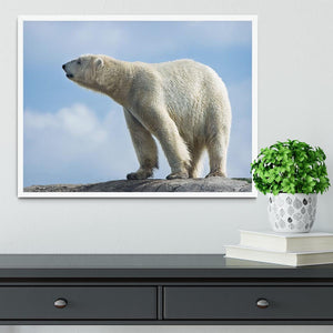 Polar bear walking on rocks Framed Print - Canvas Art Rocks -6