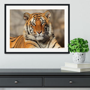 Portrait of a Bengal tiger Framed Print - Canvas Art Rocks - 1