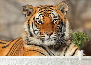 Portrait of a Bengal tiger Wall Mural Wallpaper - Canvas Art Rocks - 4