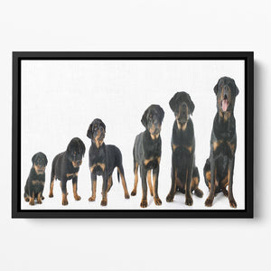 Portrait of a purebred puppy rottweiler Floating Framed Canvas - Canvas Art Rocks - 2