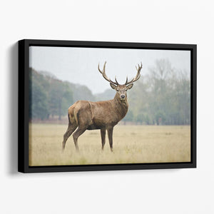 Portrait of adult red deer stag in field Floating Framed Canvas - Canvas Art Rocks - 1