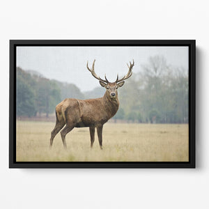 Portrait of adult red deer stag in field Floating Framed Canvas - Canvas Art Rocks - 2