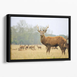 Portrait of majestic powerful adult red deer stag Floating Framed Canvas - Canvas Art Rocks - 1