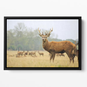 Portrait of majestic powerful adult red deer stag Floating Framed Canvas - Canvas Art Rocks - 2