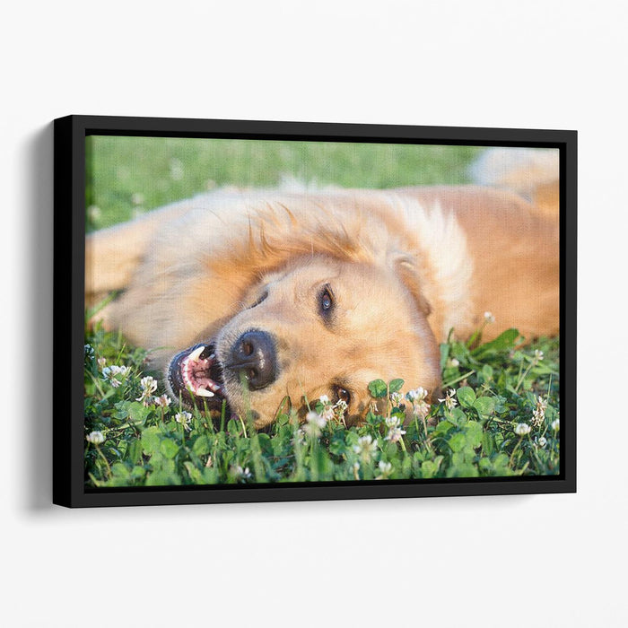 Portrait young dog playing in the meadow Floating Framed Canvas