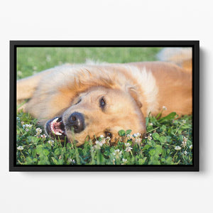 Portrait young dog playing in the meadow Floating Framed Canvas - Canvas Art Rocks - 2