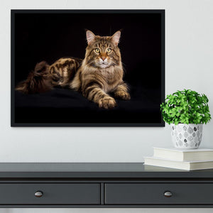 Purebred Maine Coon cat Framed Print - Canvas Art Rocks - 2