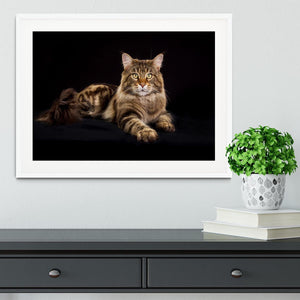 Purebred Maine Coon cat Framed Print - Canvas Art Rocks - 5