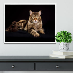 Purebred Maine Coon cat Framed Print - Canvas Art Rocks -6