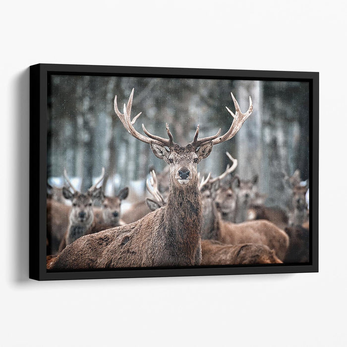Red Deer Stag and Herd Floating Framed Canvas