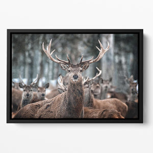 Red Deer Stag and Herd Floating Framed Canvas - Canvas Art Rocks - 2