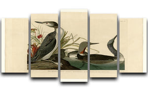 Red Throated Diver by Audubon 5 Split Panel Canvas - Canvas Art Rocks - 1