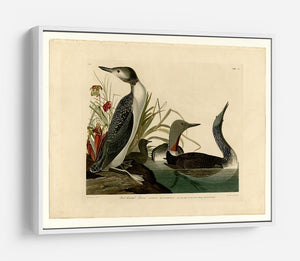 Red Throated Diver by Audubon HD Metal Print - Canvas Art Rocks - 7