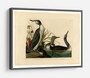 Red Throated Diver by Audubon HD Metal Print - Canvas Art Rocks - 9