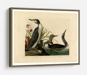 Red Throated Diver by Audubon HD Metal Print - Canvas Art Rocks - 10