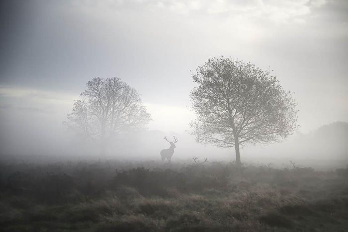 Red deer stag in foggy Autumn landscape Wall Mural Wallpaper