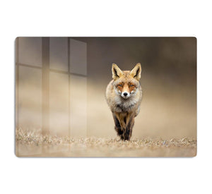 Red fox HD Metal Print - Canvas Art Rocks - 1