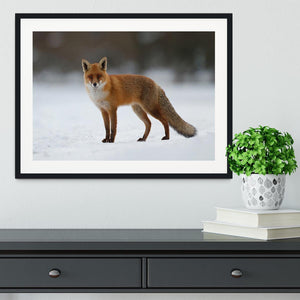 Red fox in the snow Framed Print - Canvas Art Rocks - 1