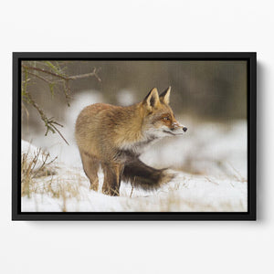 Red fox in wintertime Floating Framed Canvas - Canvas Art Rocks - 2