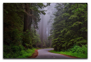 Redwood National Park Print - Canvas Art Rocks - 1