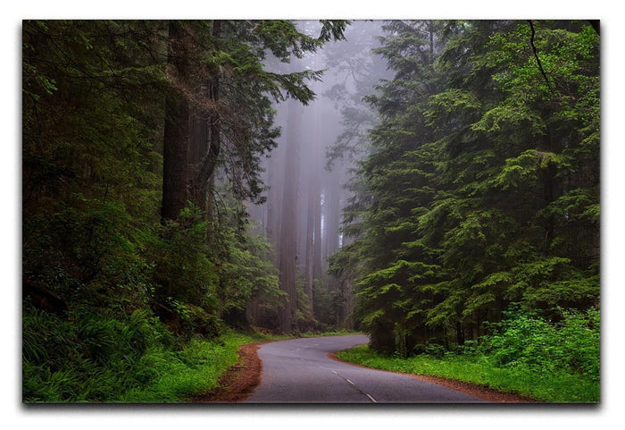 Redwood National Park Canvas Print or Poster