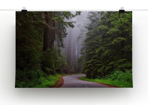 Redwood National Park Print - Canvas Art Rocks - 2