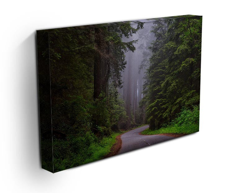 Redwood National Park Print - Canvas Art Rocks - 3