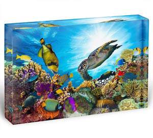 Reef with many fishes and sea turtle Acrylic Block - Canvas Art Rocks - 1
