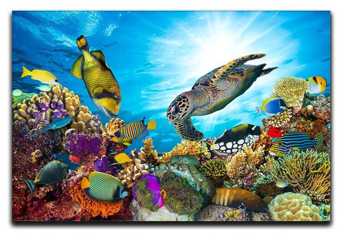 Reef with many fishes and sea turtle Canvas Print or Poster