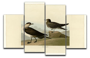 Richardsons Jager by Audubon 4 Split Panel Canvas - Canvas Art Rocks - 1