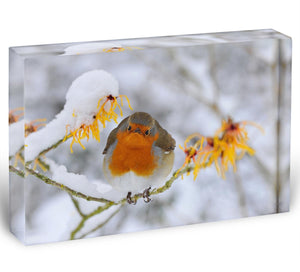 Robin in the Snow Acrylic Block - Canvas Art Rocks - 1