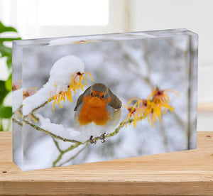 Robin in the Snow Acrylic Block - Canvas Art Rocks - 2