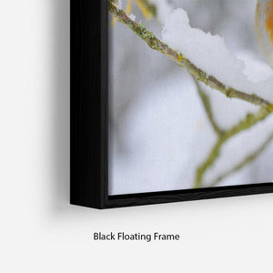 Robin in the Snow Floating Frame Canvas - Canvas Art Rocks - 2