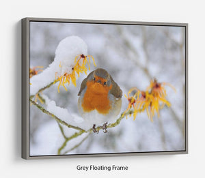 Robin in the Snow Floating Frame Canvas - Canvas Art Rocks - 3
