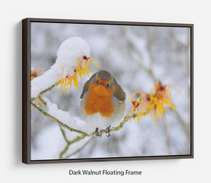 Robin in the Snow Floating Frame Canvas - Canvas Art Rocks - 5