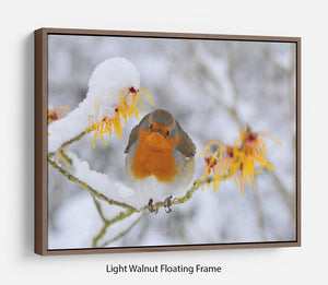 Robin in the Snow Floating Frame Canvas - Canvas Art Rocks 7