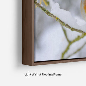 Robin in the Snow Floating Frame Canvas - Canvas Art Rocks - 8