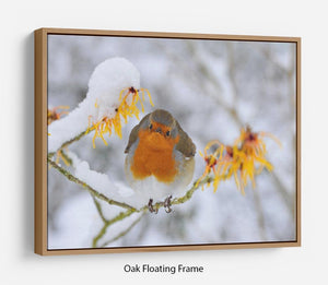 Robin in the Snow Floating Frame Canvas - Canvas Art Rocks - 9
